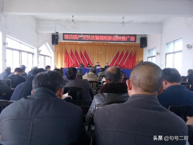 糯稻新品种助推曾店镇产业扶贫...